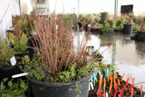 2016 Native Plant Sale